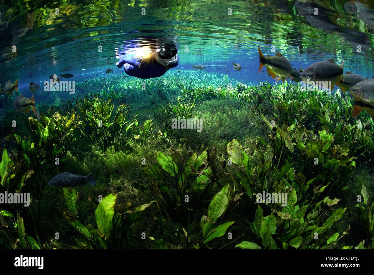 snorkeling in aquario natural spring aquario natural bonito mato