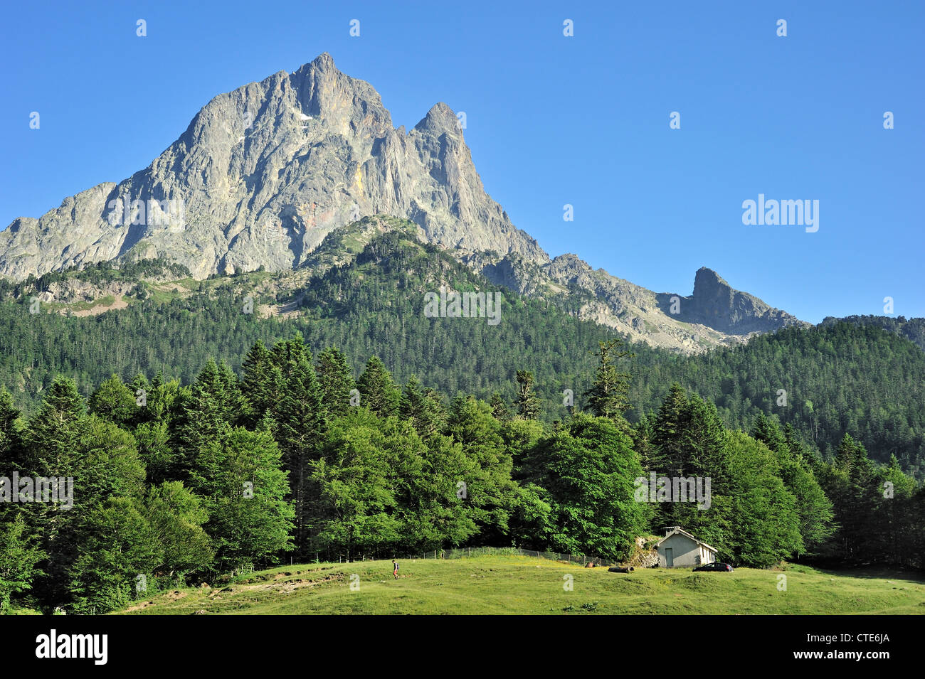 Pine forest and the Pic du Midi d'Ossau (2884 m), a mountain in the Pyrénées-Atlantiques, Pyrenees, - Stock Image