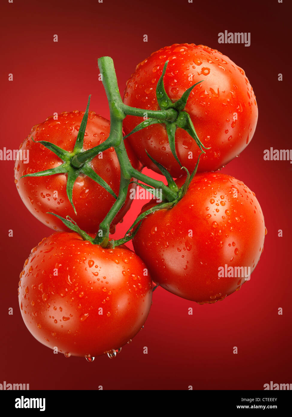 Fresh juicy appetizing tomatoes on the wine sprayed with water. Cluster tomatoes. - Stock Image