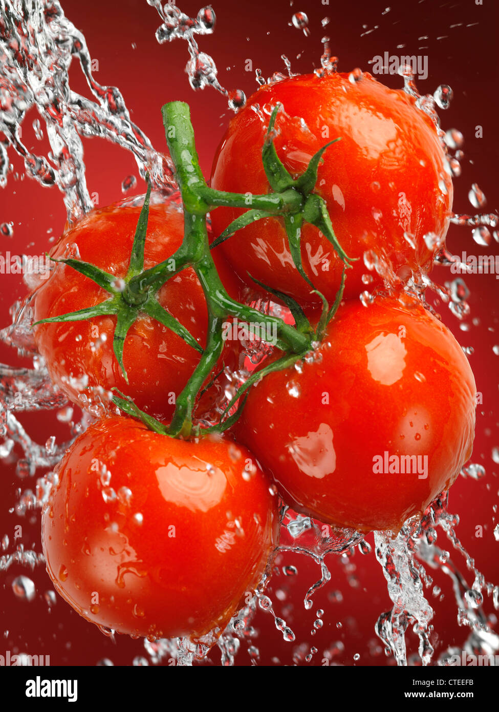 Fresh juicy cluster tomatoes, tomatoes on the vine in a big splash of water - Stock Image