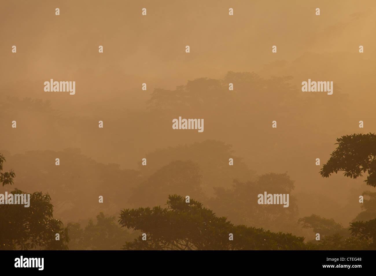 Mist at sunrise in Soberania national park, Republic of Panama. - Stock Image
