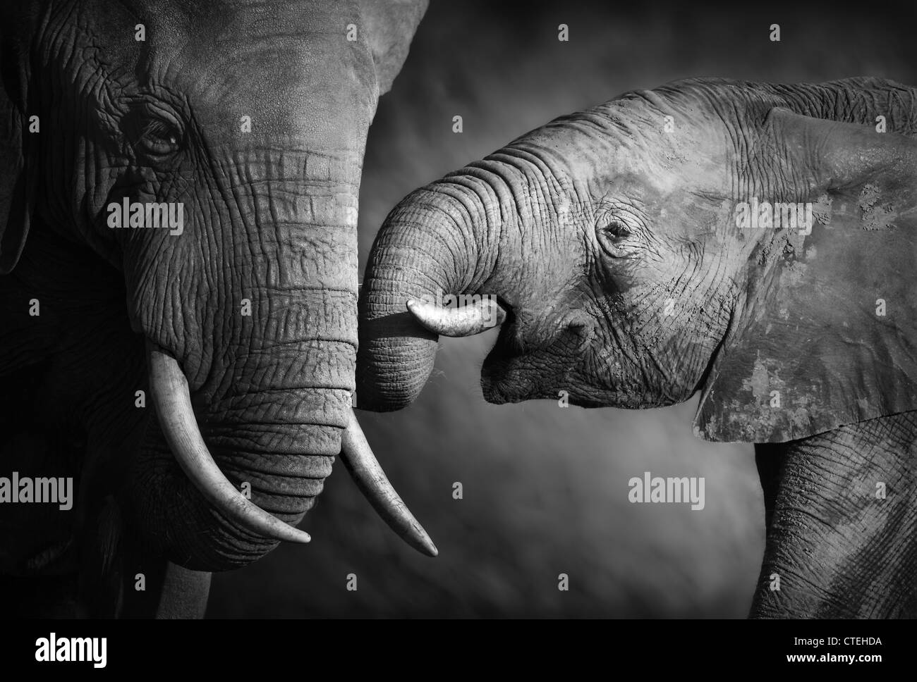 Elephants showing affection (Artistic processing) - Stock Image
