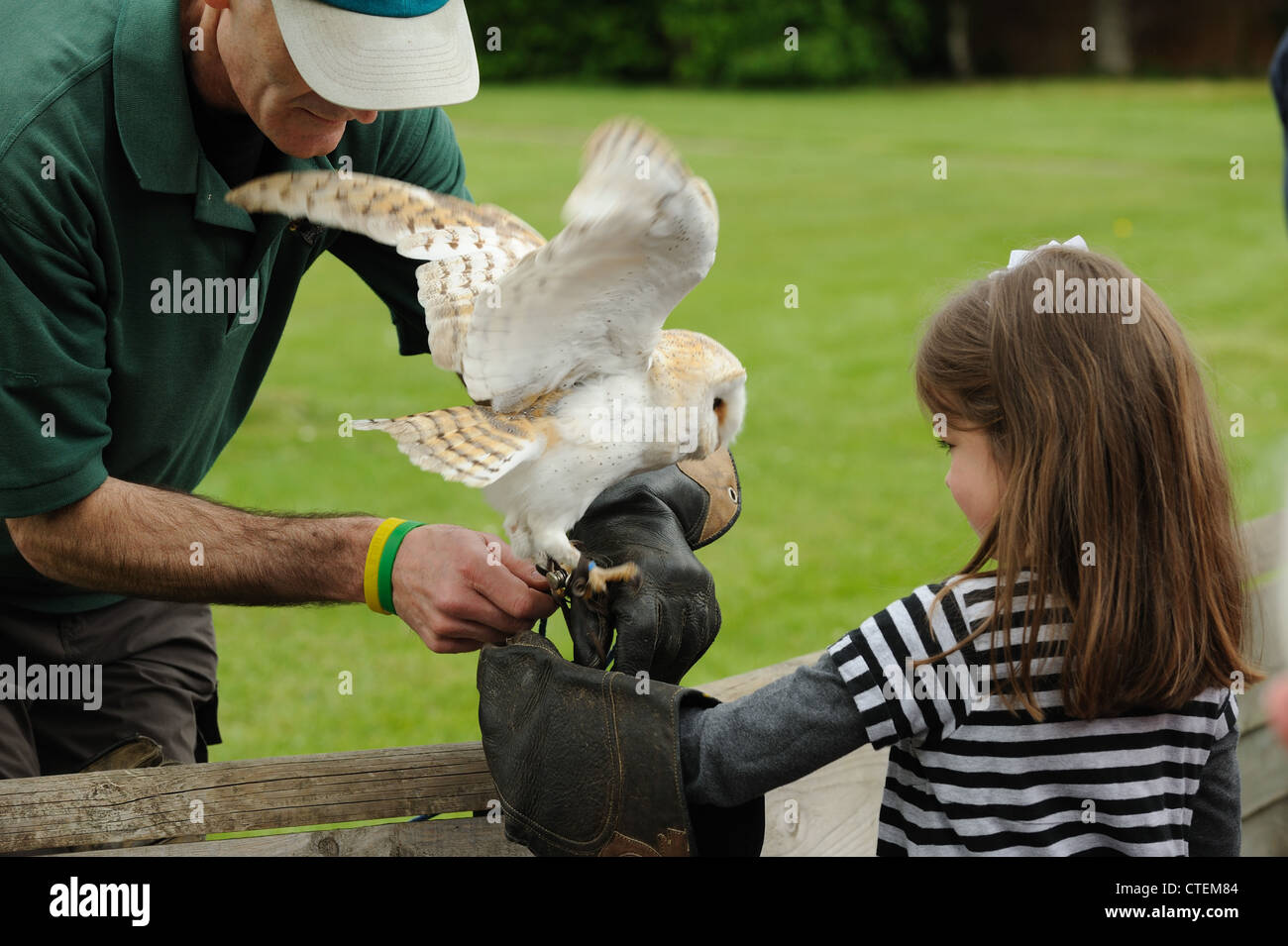 Young girl with a barn owl at the Weyhill Hawk Conservancy Trust in Hampshire - Stock Image