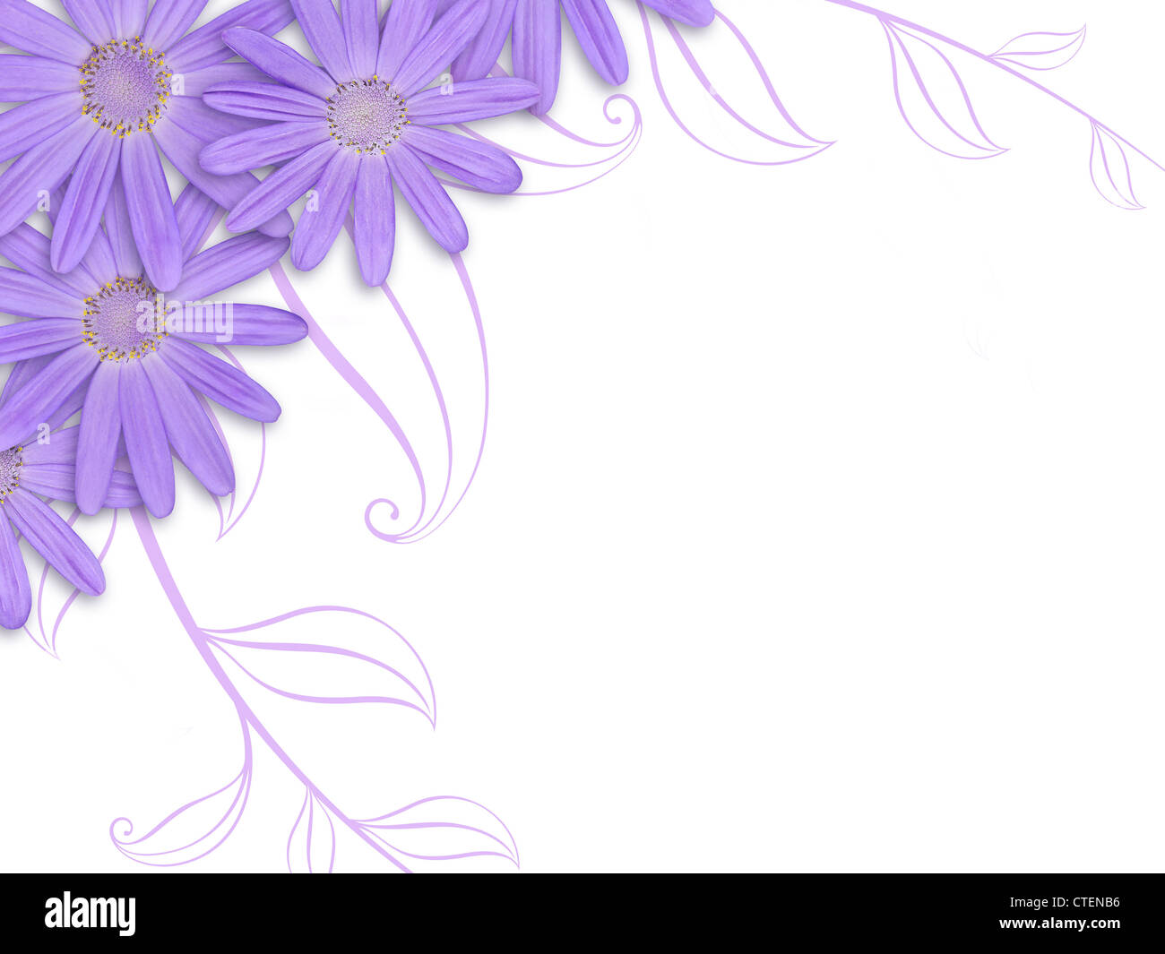 Bunch Of Purple Cineraria With Stylised Leaf Design On White