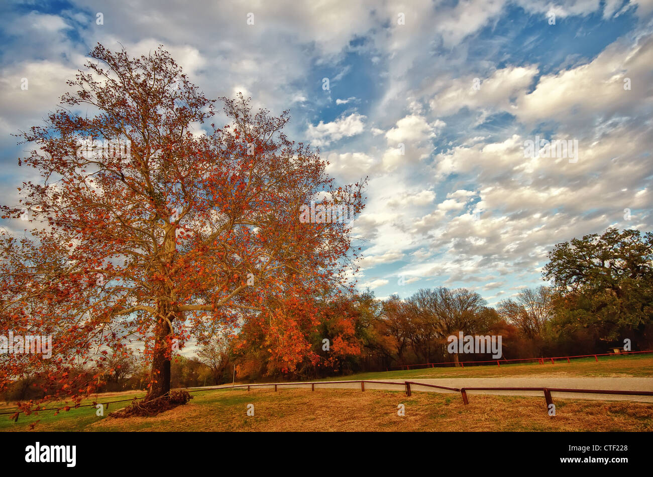 Autumn tree against beautiful cloudy sky in a park - Stock Image