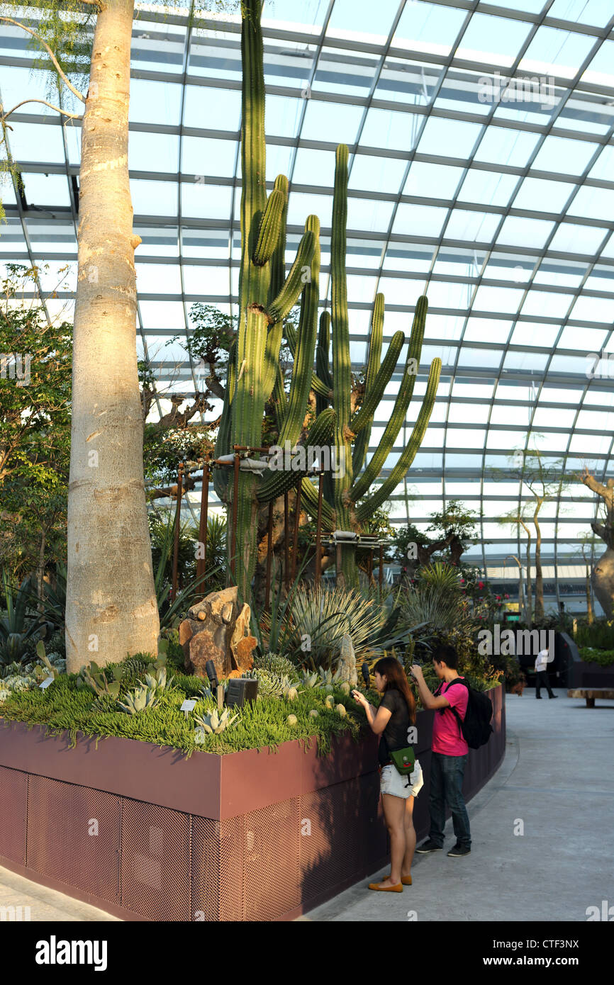Visitors enjoying and photographing the cactus inside the Flower Dome conservatory at Gardens By The Bay in Singapore. - Stock Image