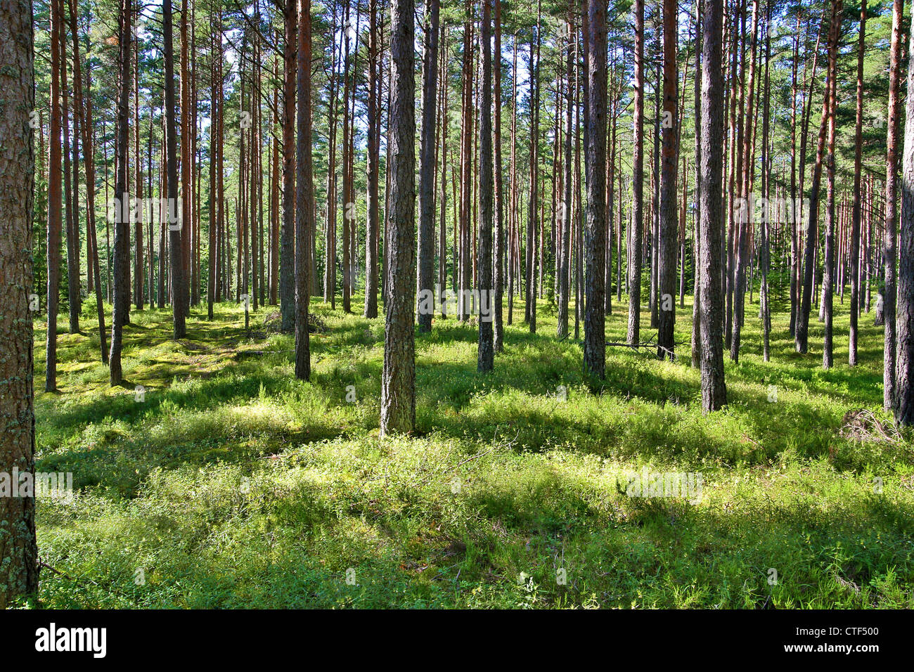 Grass and trees in forest touched by sunlight - Stock Image