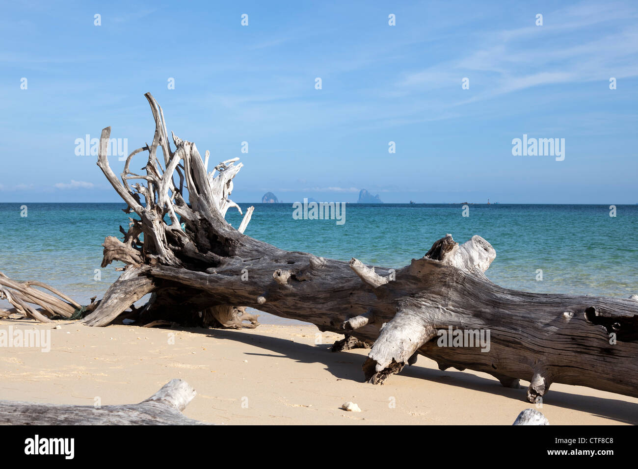A natural scenic image taken at Bulon island: the bole of a casuarina uprooted during a tempest and left on the - Stock Image