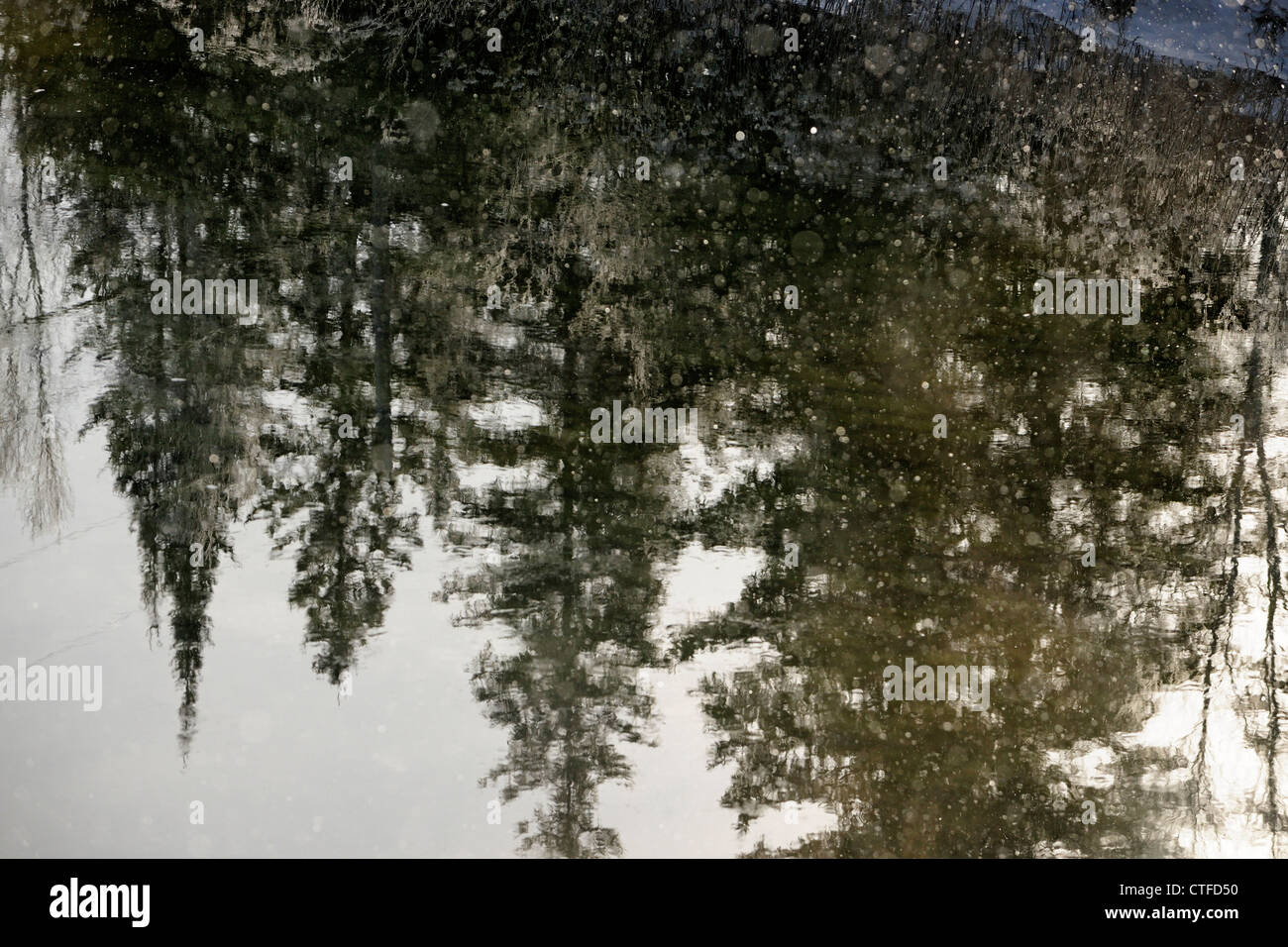 Tree reflections in open water of Junction Creek in winter, Greater Sudbury (Naughton), Ontario, Canada - Stock Image