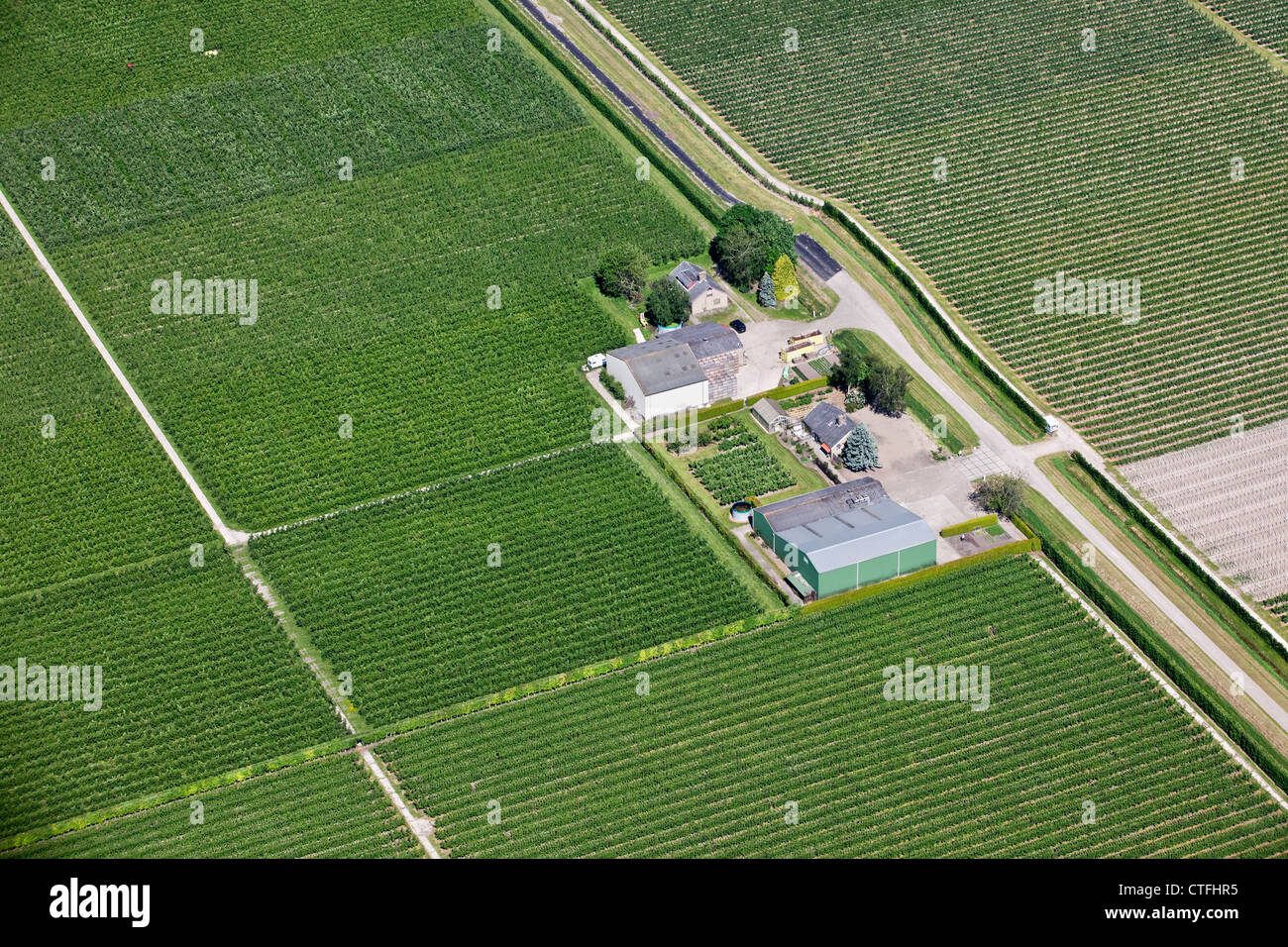 The Netherlands, Nagele, Farms and farmland in Flevopolder. Aerial. - Stock Image