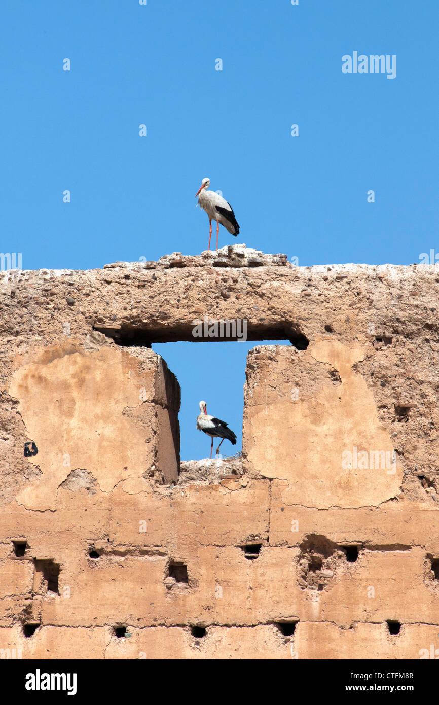 Morocco, Marrakech Dar Si Said palace. Common stork. - Stock Image