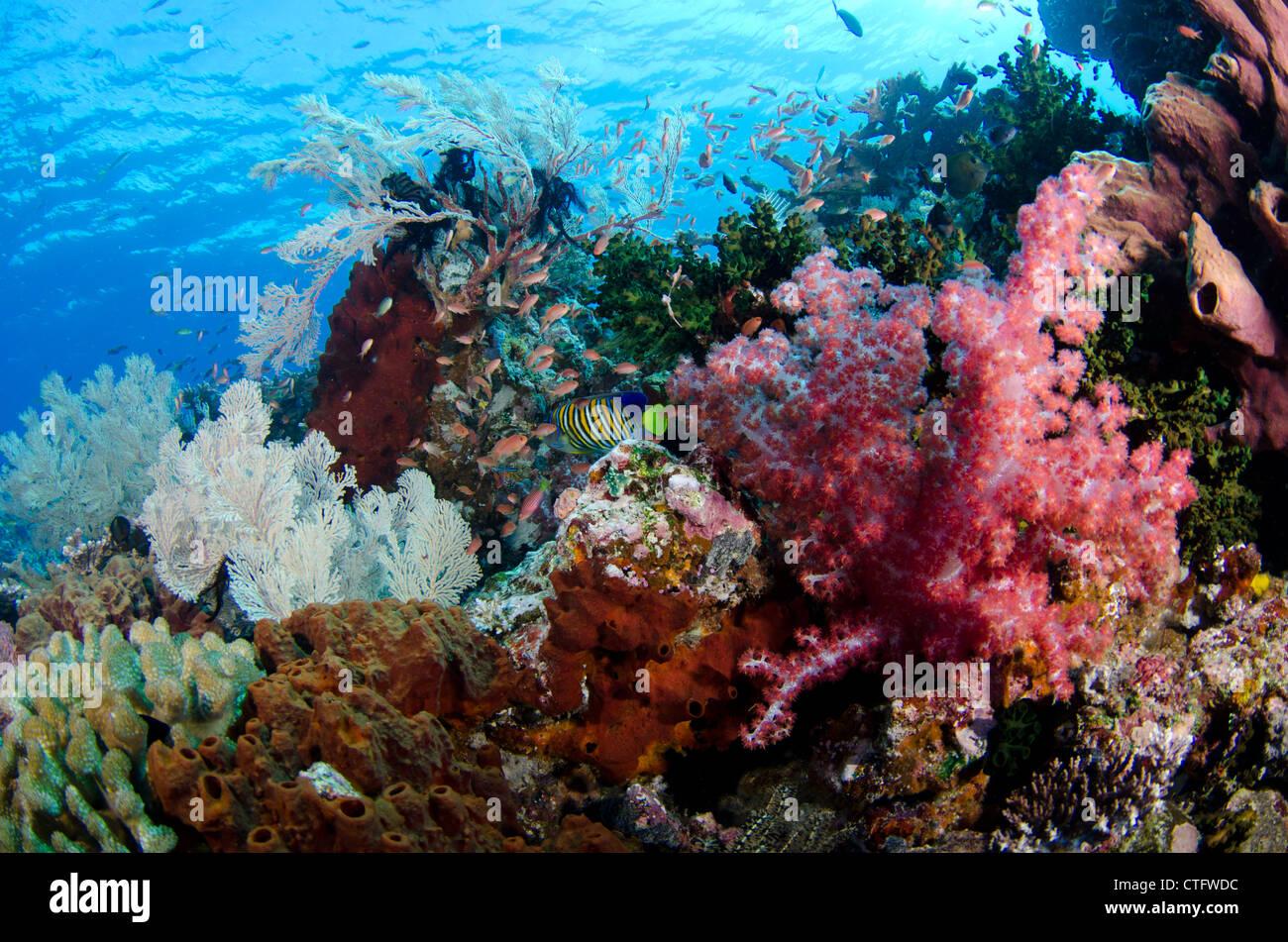 Coral reef scene, Komodo national park, Indonesia - Stock Image
