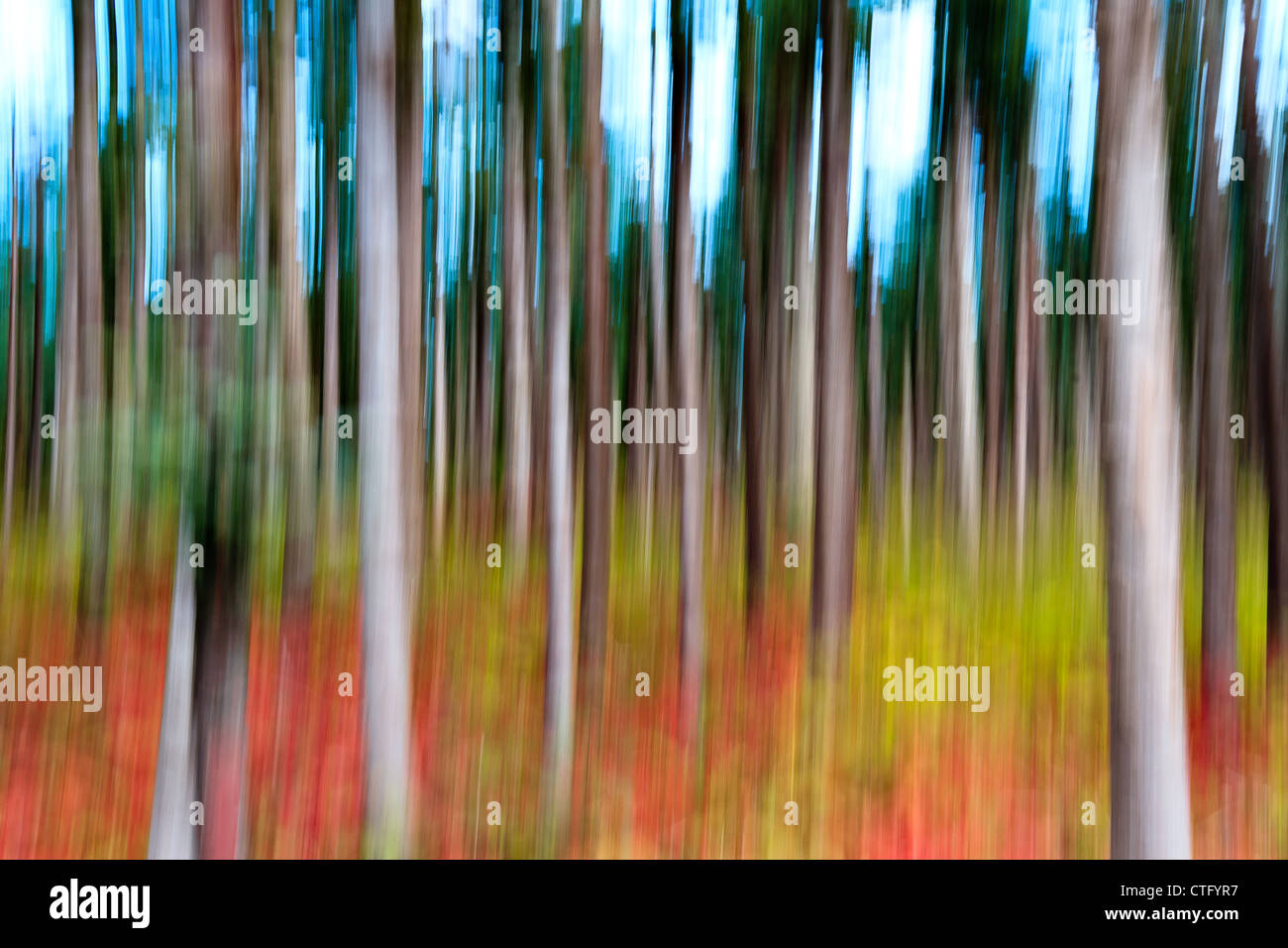 Abstract panning view of forrest - Stock Image