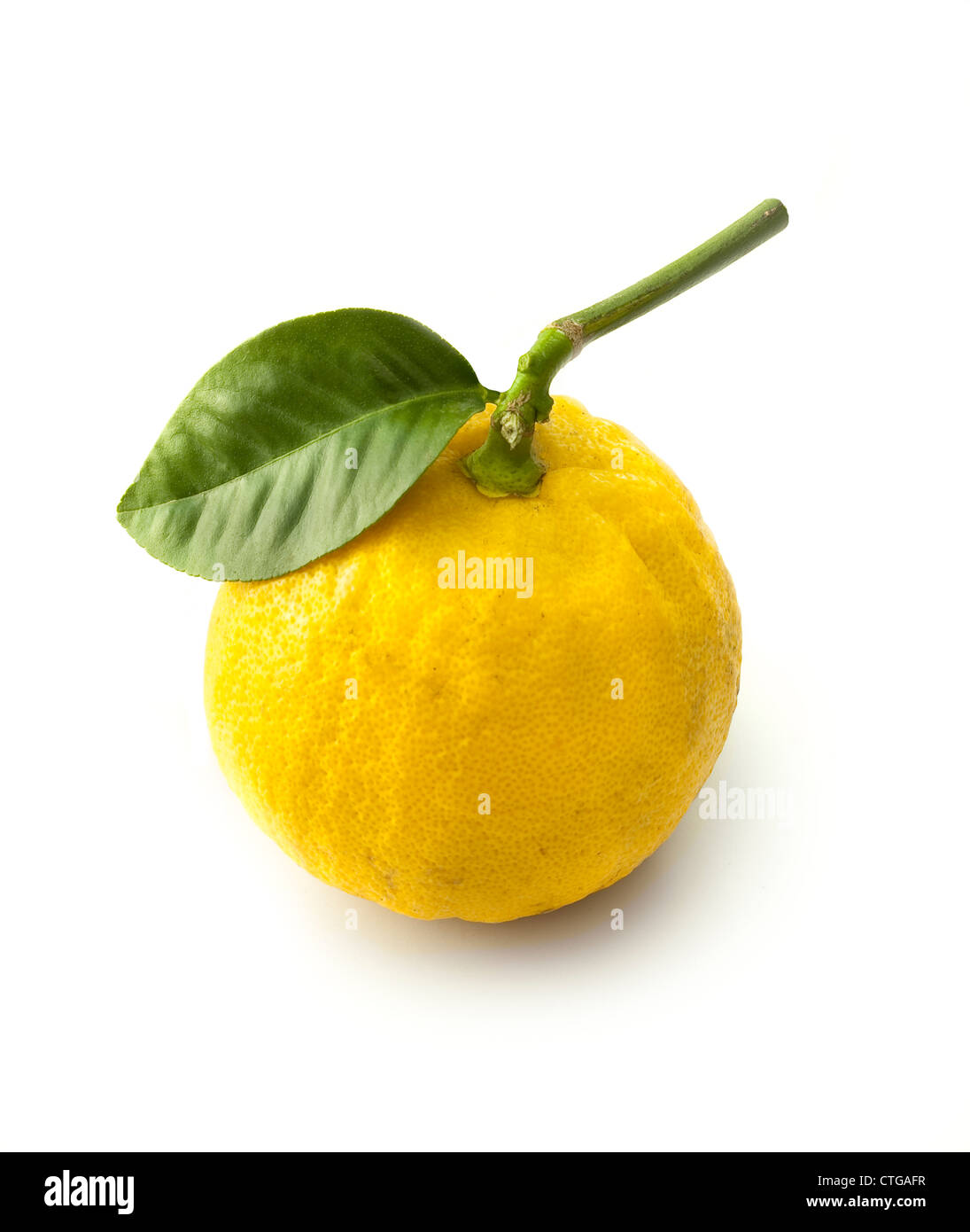 Citrus bergamia, Bergamot, Studio shot of single yellow fruit on leafy stem against a white background. - Stock Image