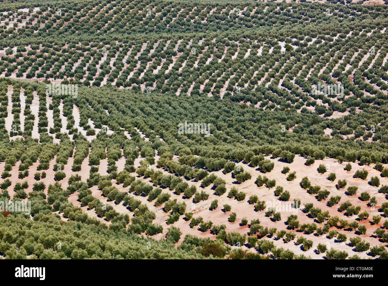 Olive Groves Near Mancha Real; Jaen Province, Spain Stock Photo