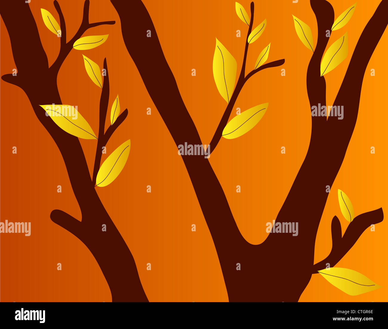 Fall season leaves on tree branches Stock Photo