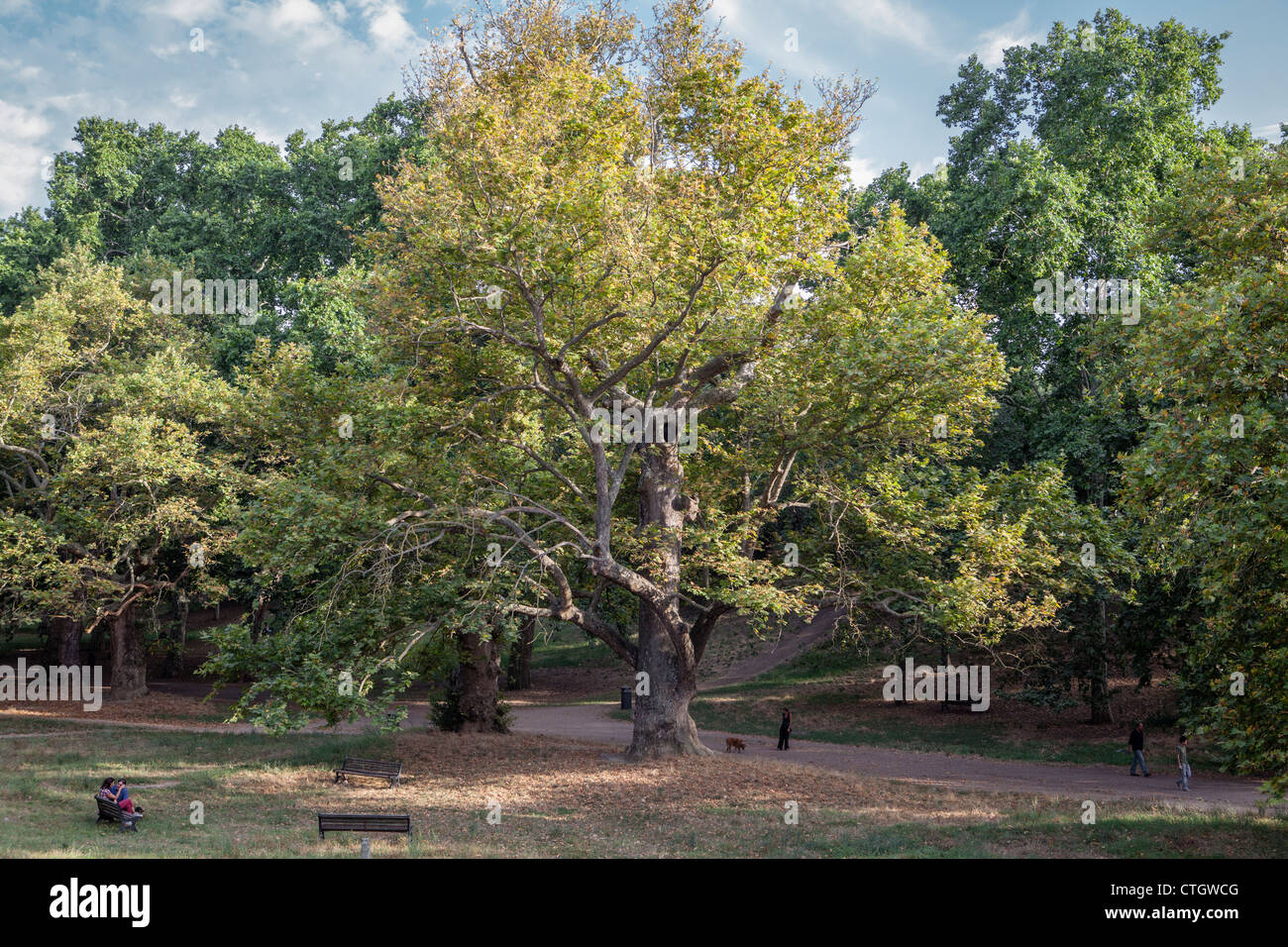 Trees in park, Villa Borghese, Rome, Italy, Europe - Stock Image