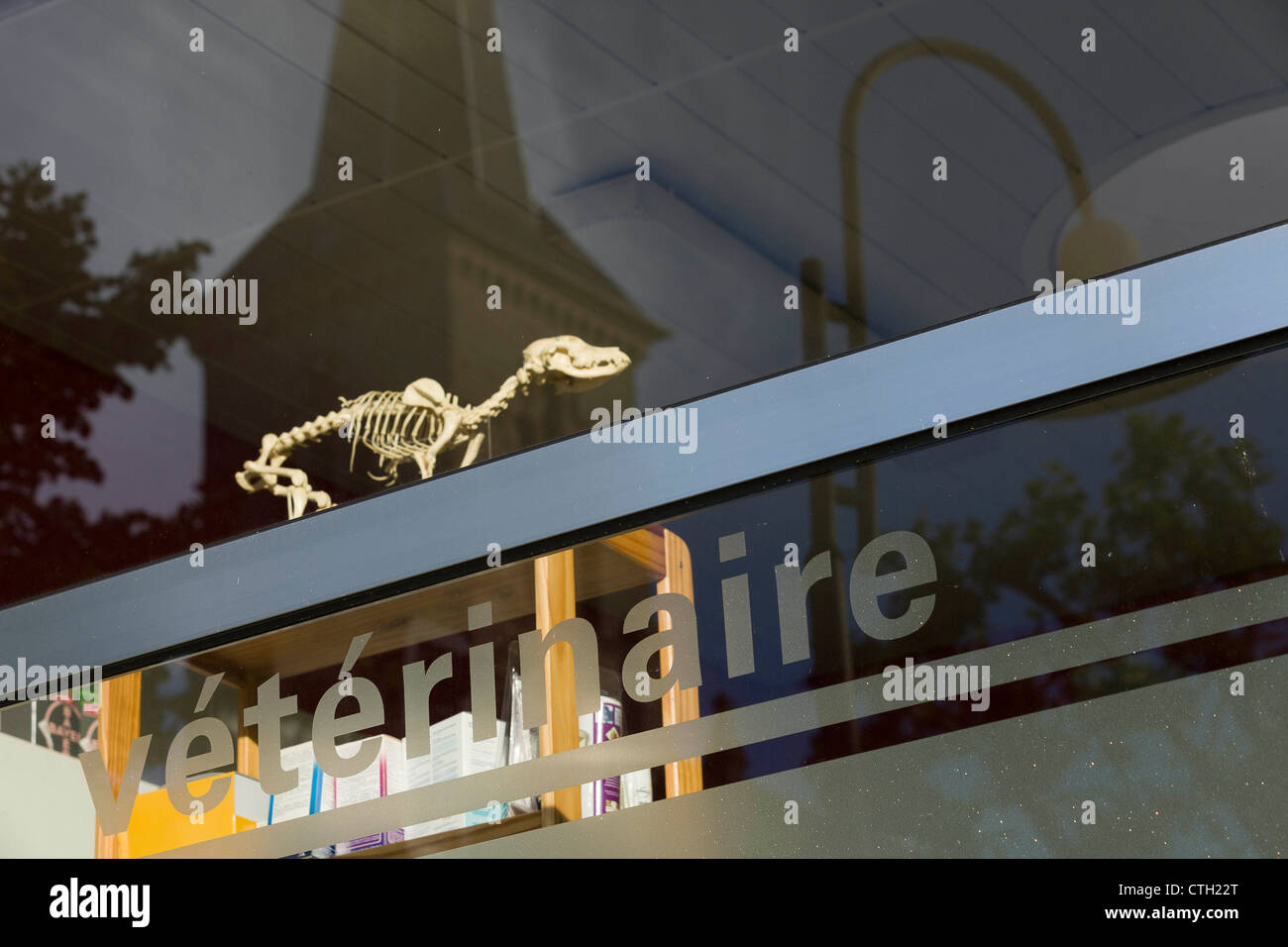Skeleton of a dog and inscription 'Véterinaire', french for veterinarian  in the window of a veterinary - Stock Image