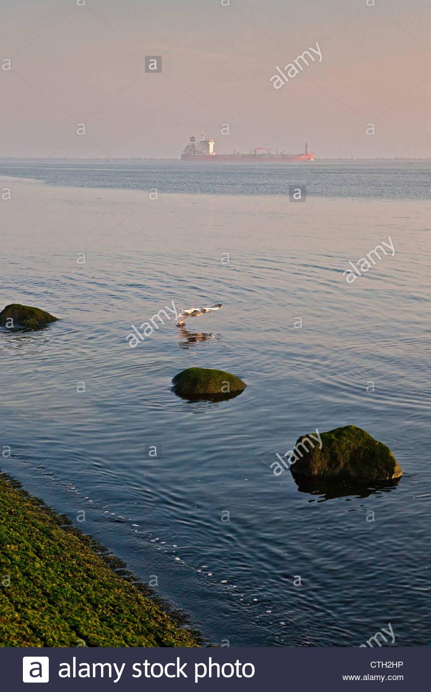 The Netherlands, Rotterdam, Port. Tanker. Seagull taking off. - Stock Image