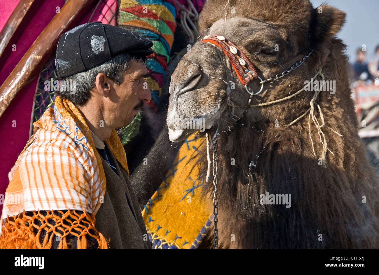 Camel Fights, Izmir. Turkey. - Stock Image