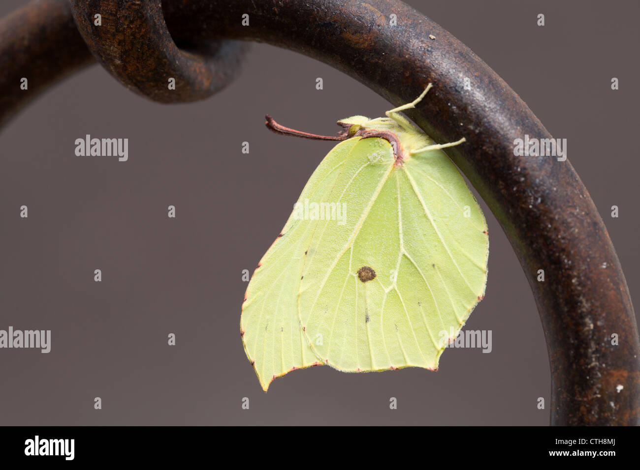 Metal Butterfly Stock Photos & Metal Butterfly Stock Images - Alamy