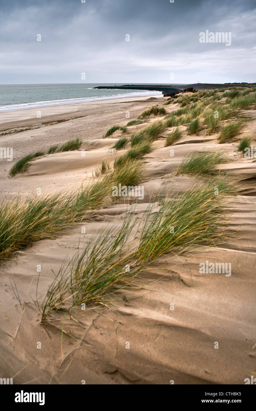 The Netherlands, Kamperland, Beach and beach grass. - Stock Image