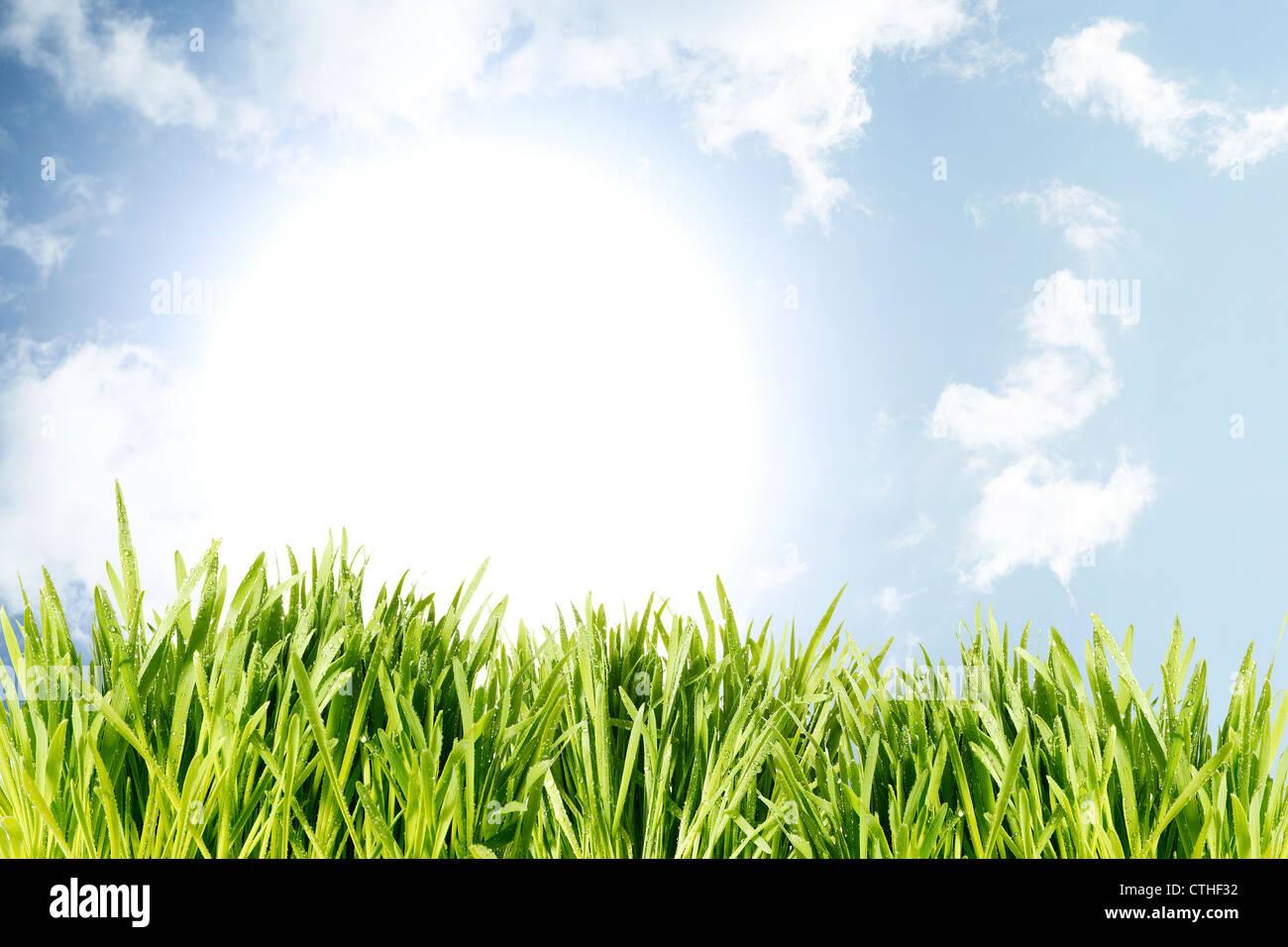 green wet grass blue sky rising sun - Stock Image