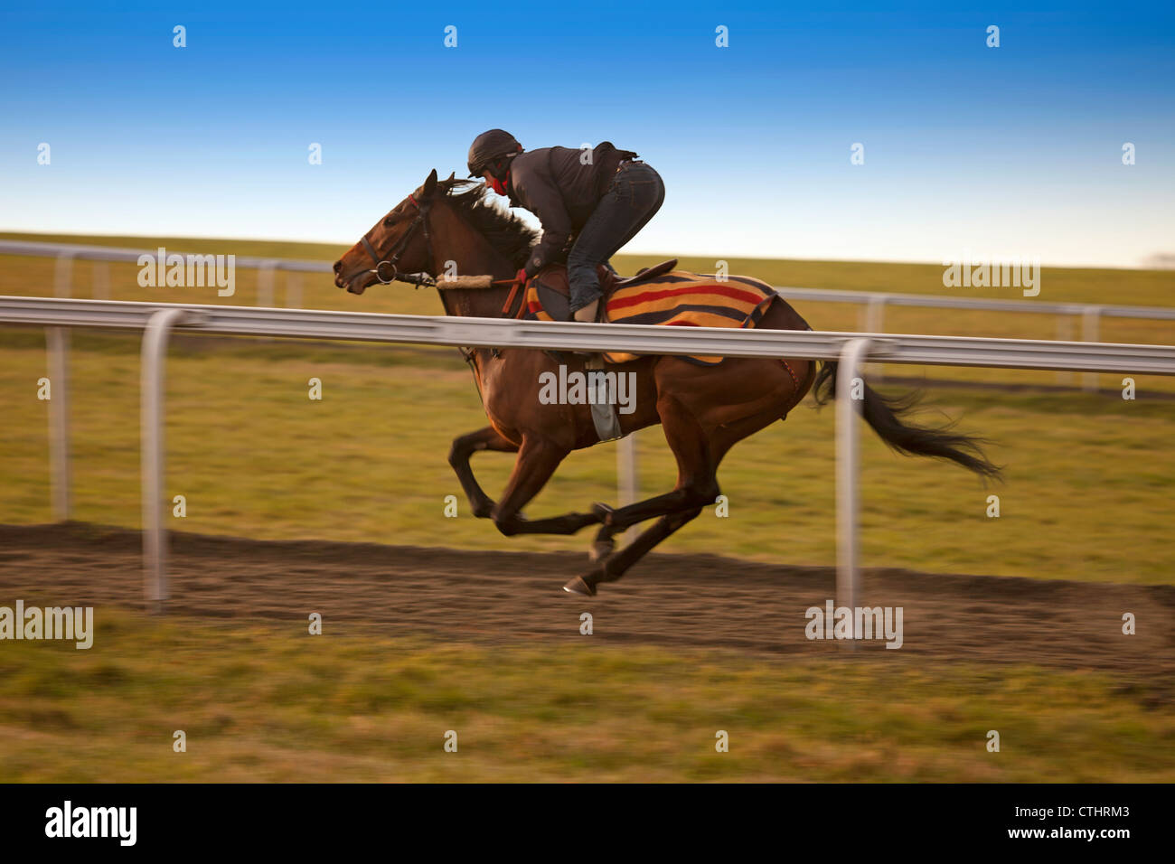 Racehorse at full gallop - Stock Image