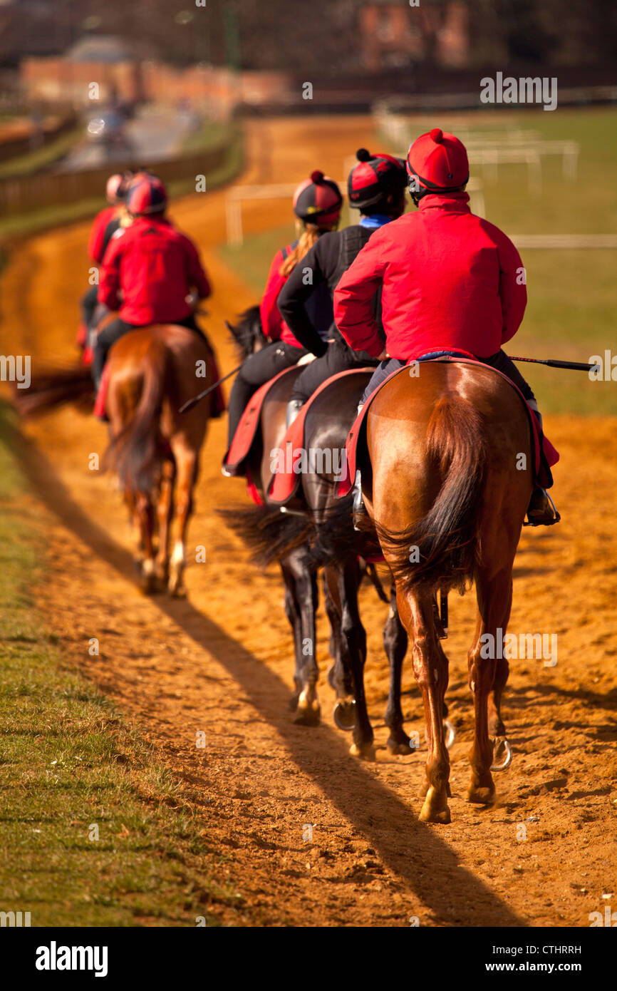 a string of racehorses walking back towards the start of the course in training Stock Photo