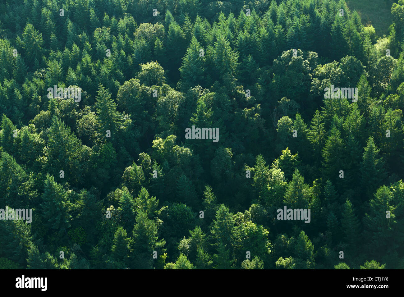 Aerial view of trees in forest - Stock Image