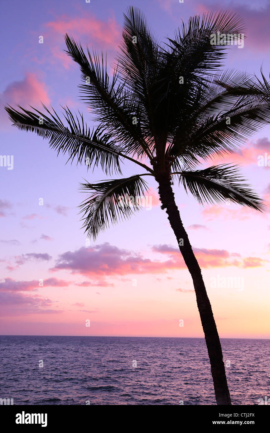 Palm tree silhouette at sunset, Hawaii - Stock Image