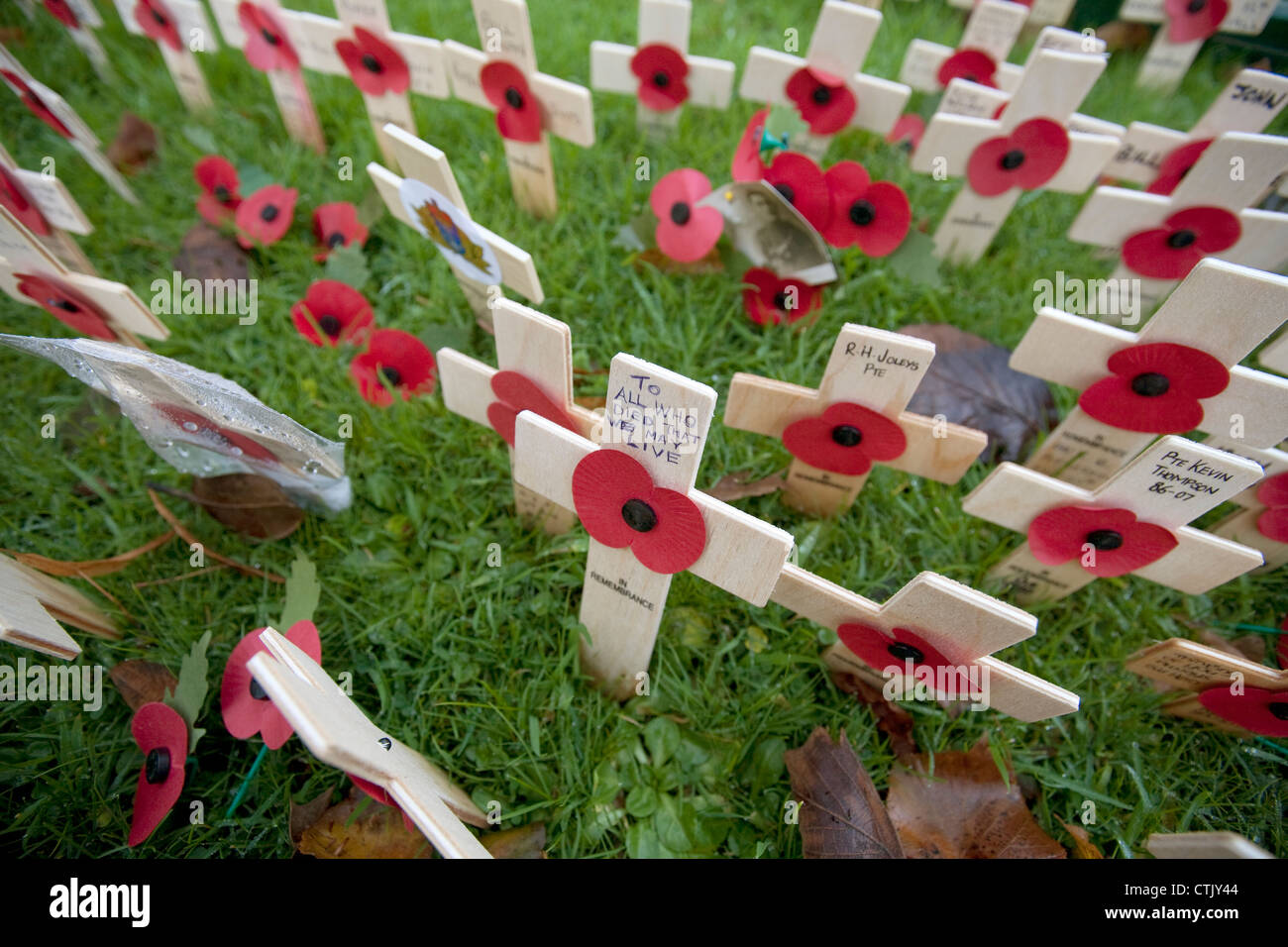 wooden poppy crosses with old photographs in annual Field of Remembrance for casualties of war on armistice day - Stock Image