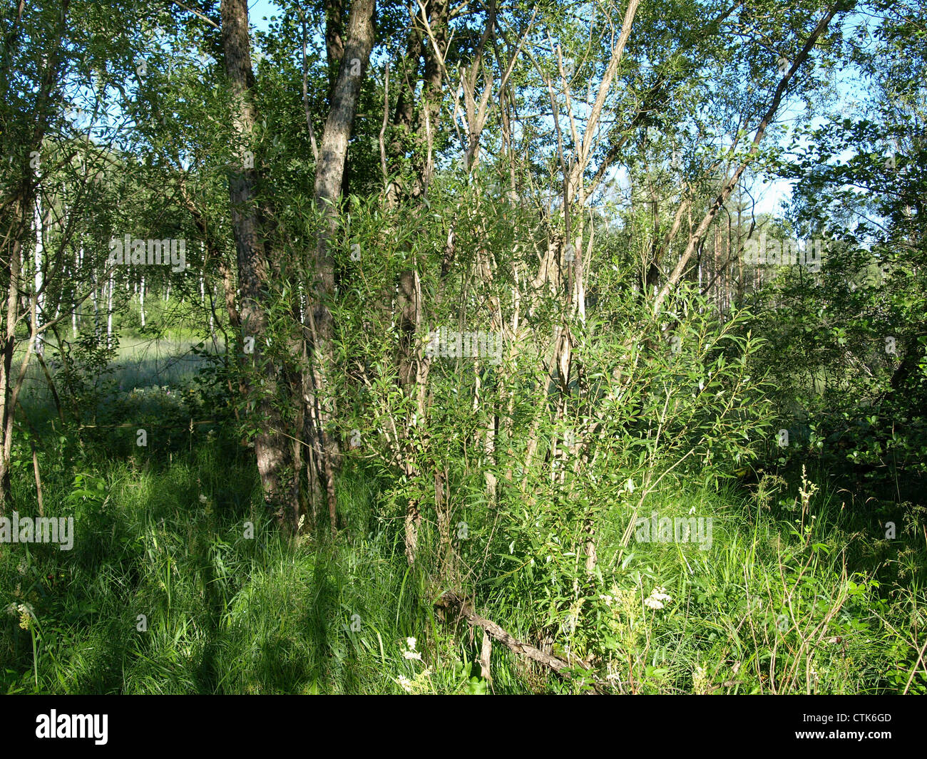 wood and meadow  in the Arrach high moor / Wald und Wiese im Arracher Hochmoor Stock Photo