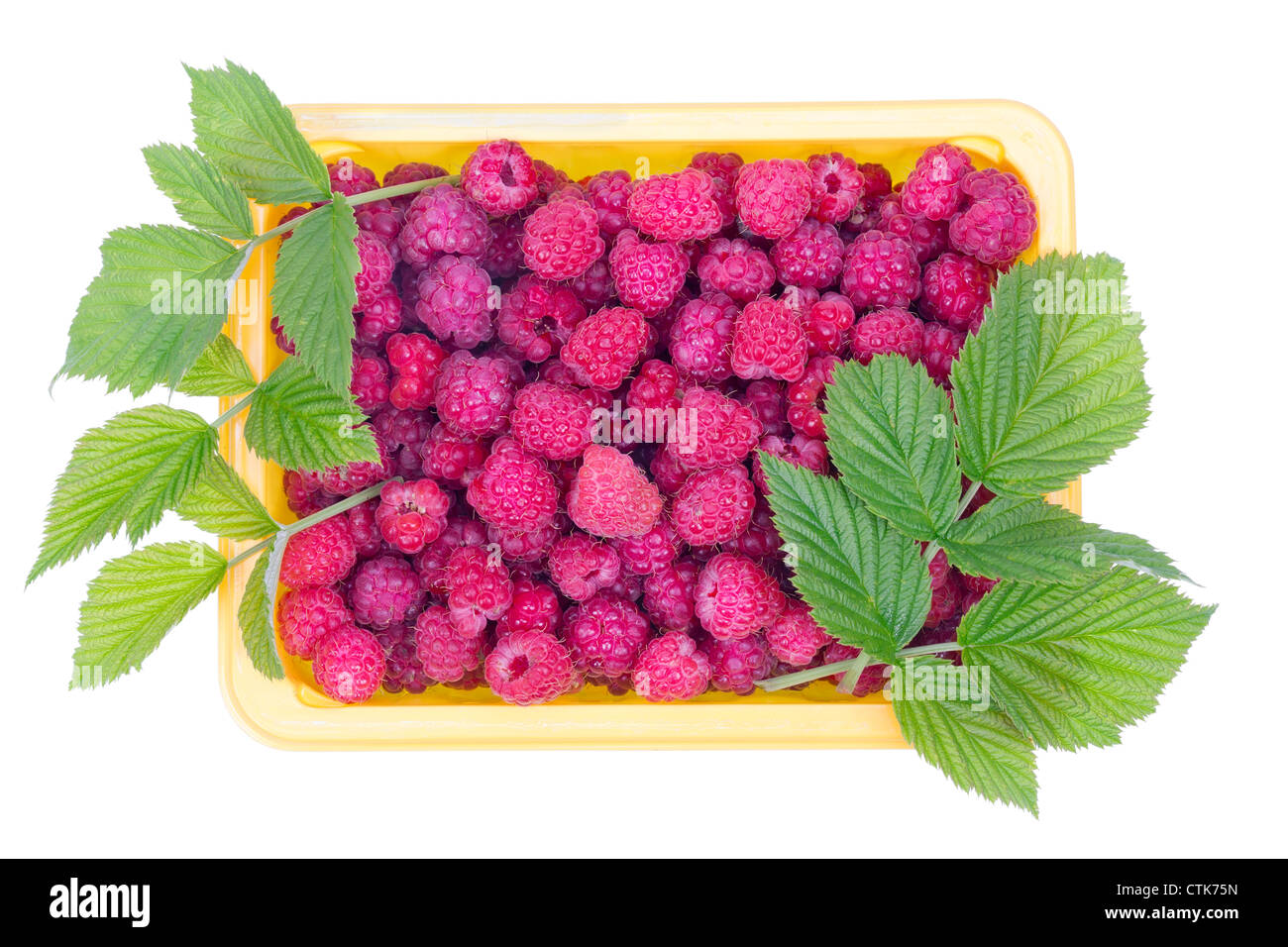 Ripe red raspberries with leaves . Fruits are grown without fertilizers, environmentally friendly product. Studio - Stock Image