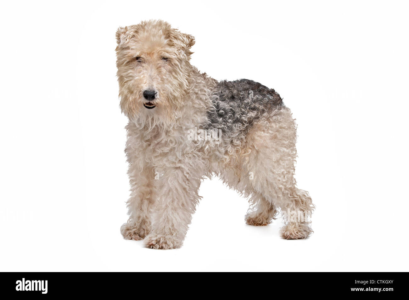 Wire Fox Terrier Cut Out Stock Images & Pictures - Alamy
