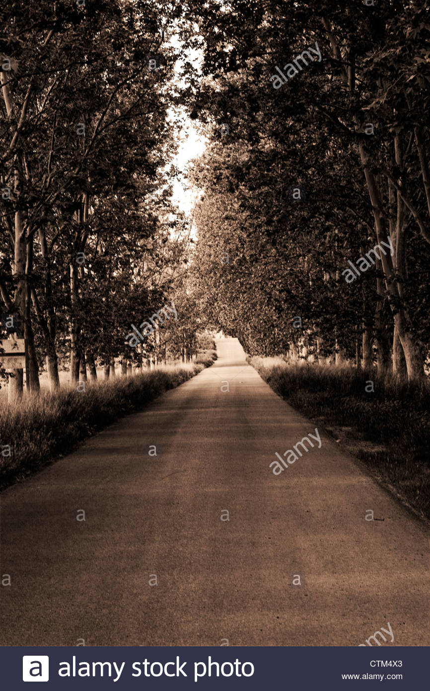 Lonely road surrounded by trees. Melancholic road. - Stock Image
