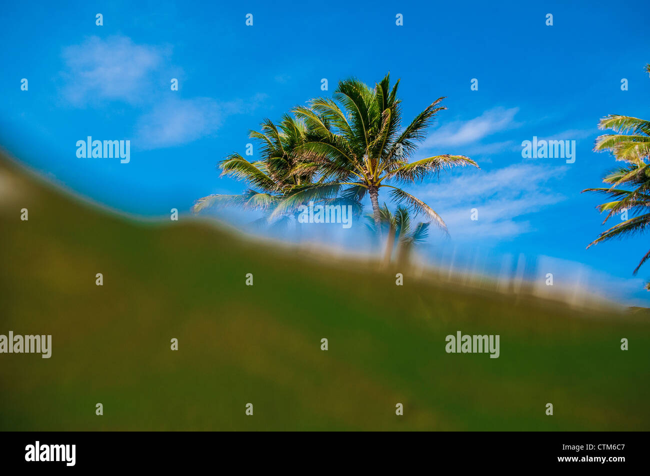 Coconut trees & sea split level view, Kailua Bay, Oahu, Hawaii - Stock Image
