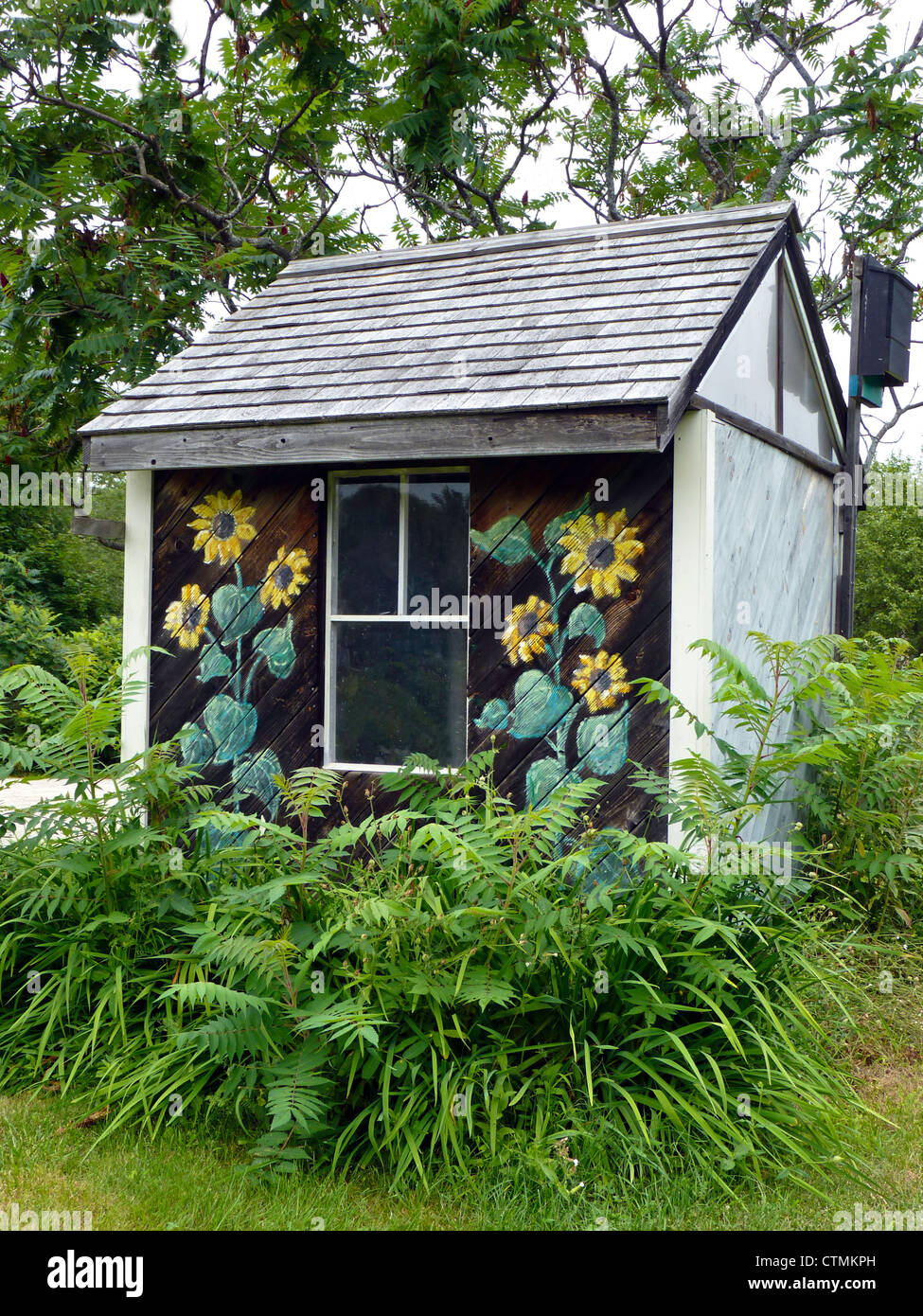 Painted garden shed with sunflowers in community garden, Yarmouth Maine, USA - Stock Image