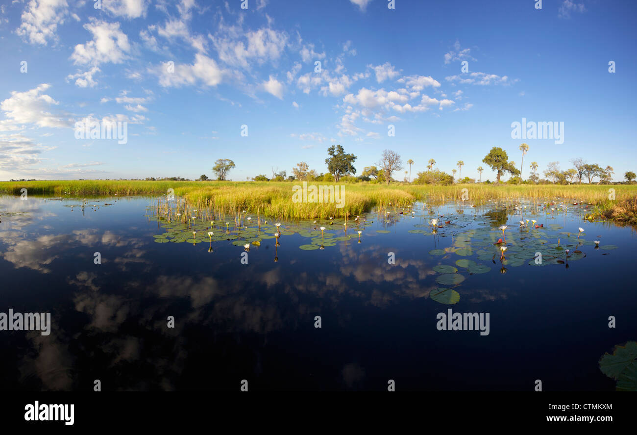 A scenic view of the Okavango Delta, Botswana - Stock Image