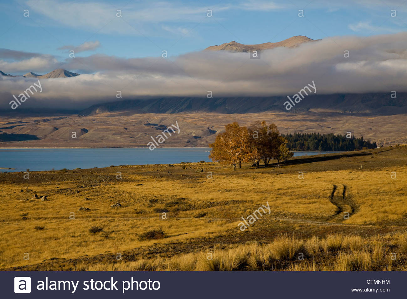 The warm colours of autumn are enhanced by the late afternoon sun near Lake Tekapo, Otago, South Island, New Zealand - Stock Image