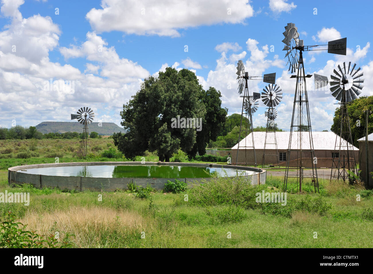 Karoo sheep farm, windmills and storage reservoir, Karoo, South Africa - Stock Image