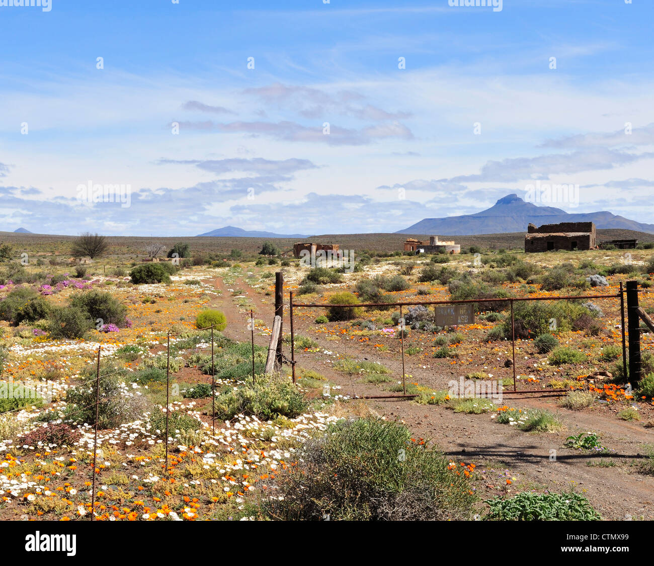 Wild flowers surrounding crumbling farmhouses in Namaqualand, Northern Cape, South Africa - Stock Image