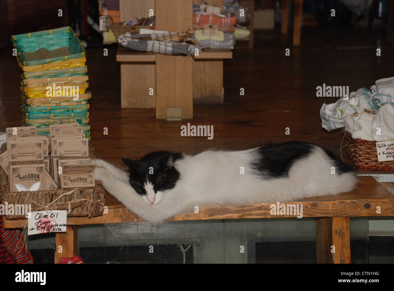 An uber-chilled cat with its feet up in a lovely little body shop in Istanbul. Picture: Adam Alexander/Alamy - Stock Image