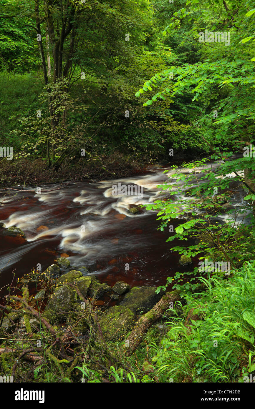 The River Twiss in summer near Ingleton in the Yorkshire Dales of England - Stock Image