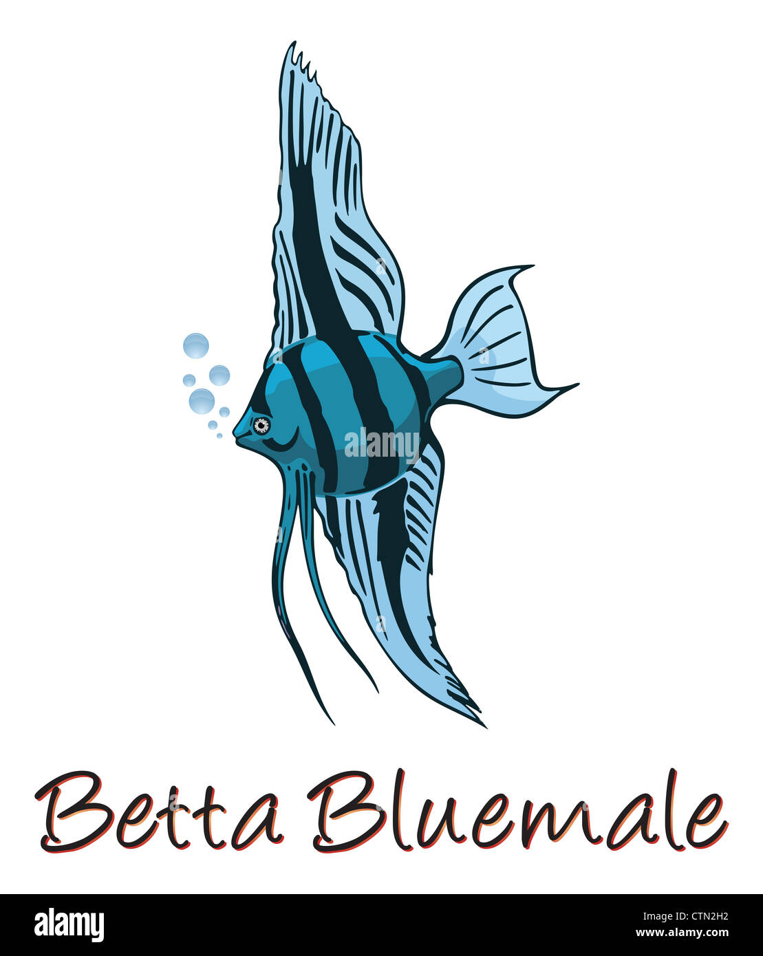 Betta, Color Illustration Stock Photo