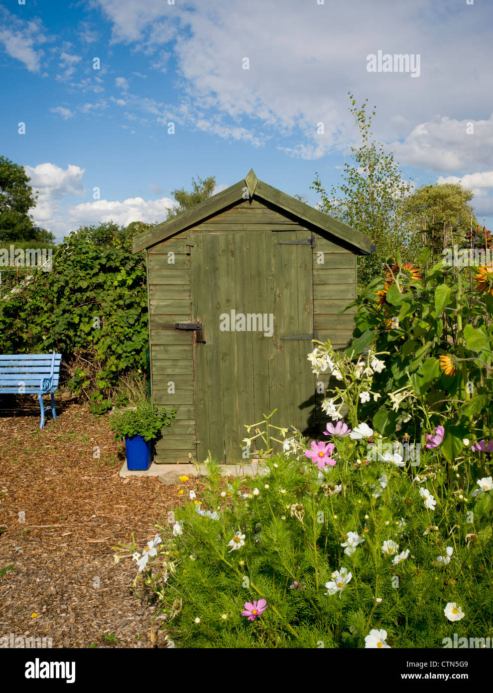 Shed on an allotment. - Stock Image