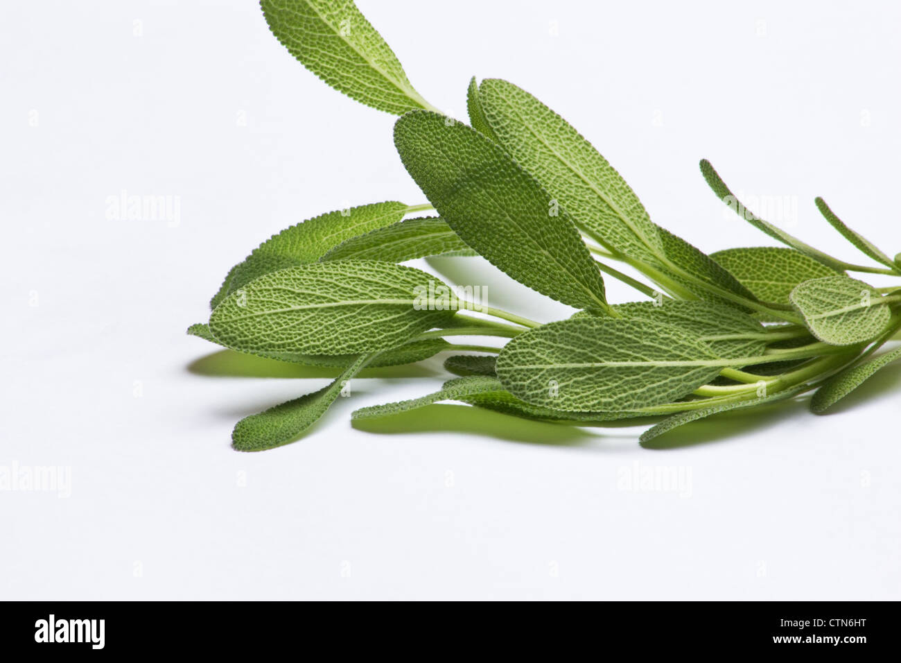 Sage (salvia officinalis) sprigs on white background - Stock Image