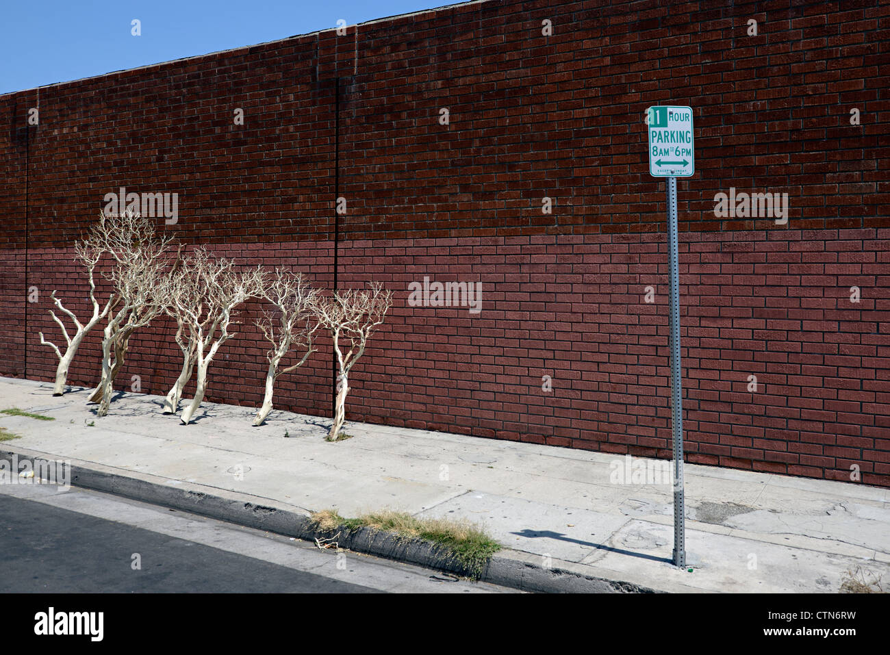 tree branches downtown la - Stock Image