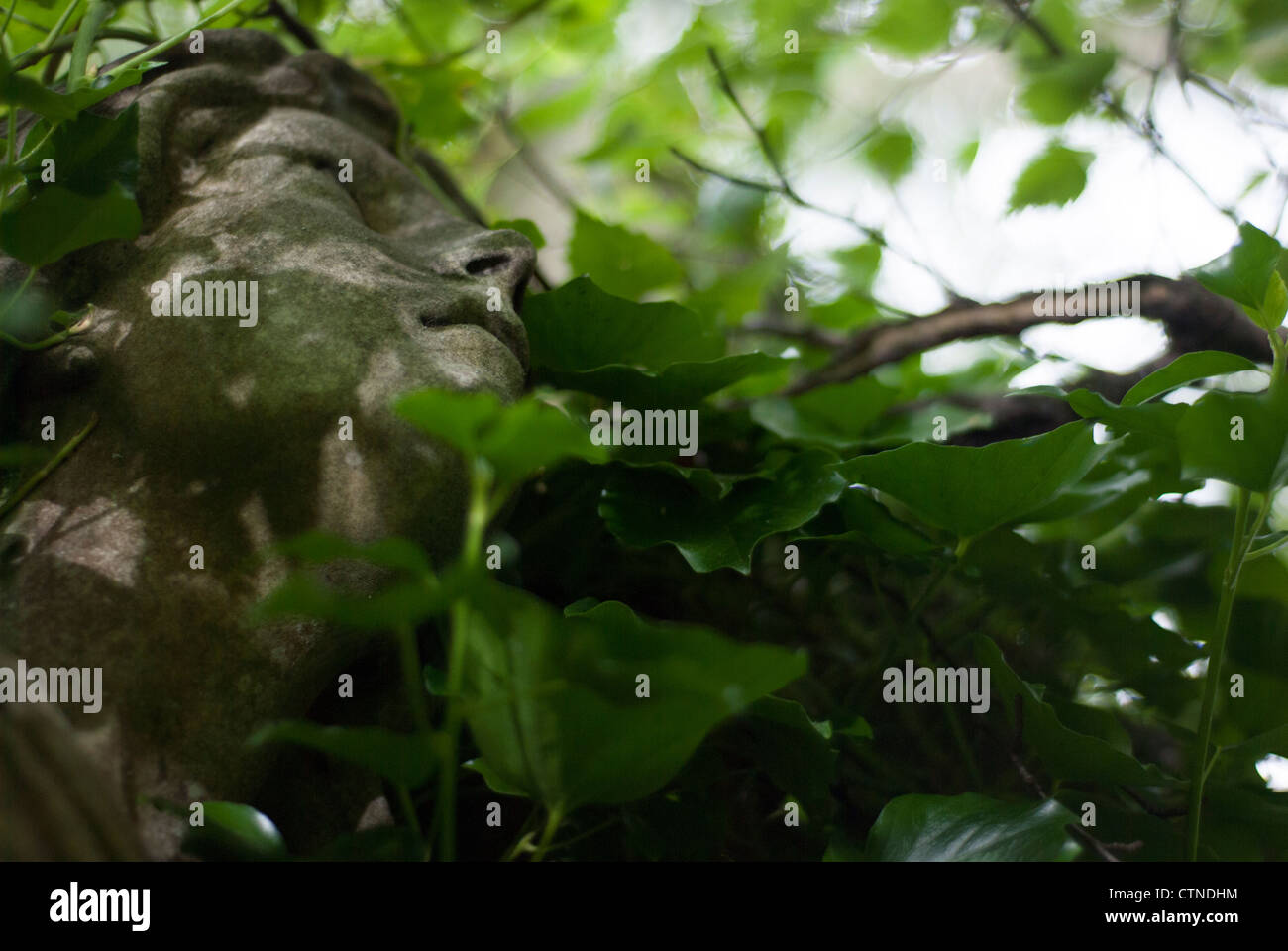 Angel Sculpture Overgrown with Ivy - Stock Image