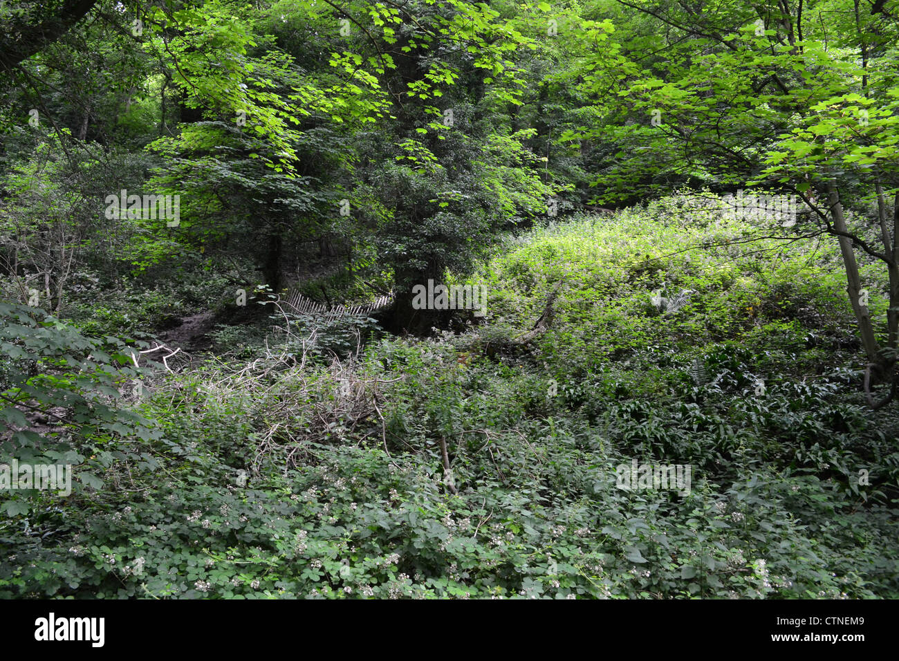 Deep in the Hedges. - Stock Image